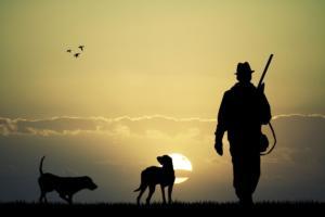 Организация охоты